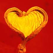 Heart-shaped Nutshell Art Print