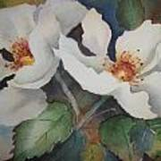 Hedge Roses Art Print