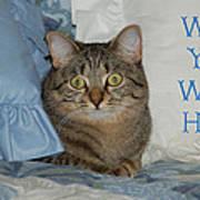 Heidi Cat Miss You Art Print