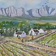 Helderberg Wine Estate Art Print
