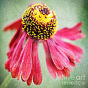 Helenium Flower 2 Art Print