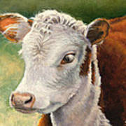 Herford Calf  Art Print