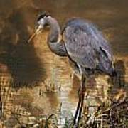 Heron Bronze Art Print