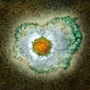 Herpes Virus Particle, Tem Art Print by Hazel Appleton, Centre For Infectionshealth Protection Agency