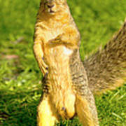 Hey Buddy Have You Seen My Nuts Print by James Marvin Phelps