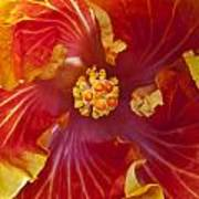 Hibiscus Center Art Print