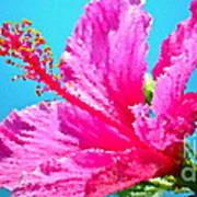 Hibiscus Crystal Luster Art Print