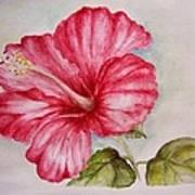Hibiscus Flower Art Print by Draia Coralia