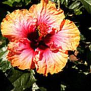 Hibiscus Flower Art Print by Lisa Phillips
