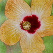 Hibiscus Gold And Red Art Print