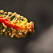 Hibiscus Pollen Art Print