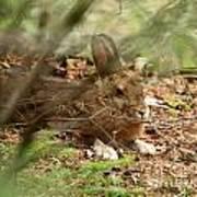 Hidden Hare Art Print
