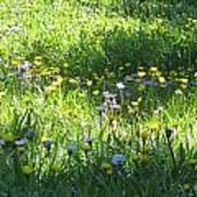 High Meadow Flowers Art Print