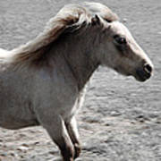 High Spirited Pony Art Print