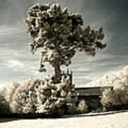High Tree Art Print