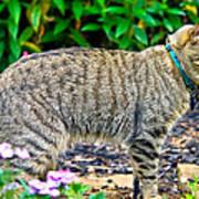 Highland Lynx Cat In Garden Art Print