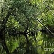 Hillsborough River Reflections Art Print