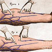 Historical Illustration Of Blood Vessels Art Print