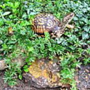 Hitchin A Ride On A Turtle  Art Print
