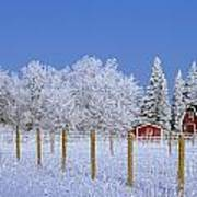 Hoarfrost On Trees Around Red Barns Art Print