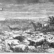 Hog Driving, 1868 Art Print