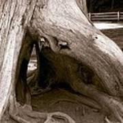 Hollow Tree Art Print