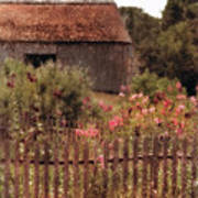 Hollyhocks And Thatched Roof Barn Art Print