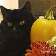 Black Cat And Pumpkin Art Print