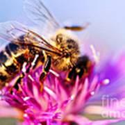 Honey Bee  Art Print by Elena Elisseeva