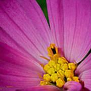 Honey Bee's Candy Dish Art Print