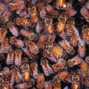 Honey Honey Art Print