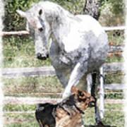 Horse And Dog Play Art Print