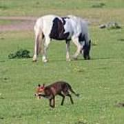 Horse And Fox Art Print