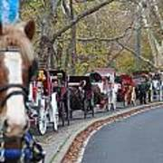 Horse-drawn Carriages Art Print