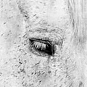 Horse Eye Art Print by Darren Fisher