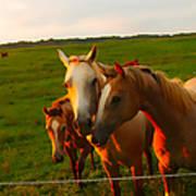 Horse Family Soft N Sweet Art Print