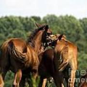 Horse Foul Play IIi Art Print