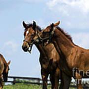 Horse Foul Play Vi Art Print