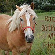 Horse Friend Birthday Art Print