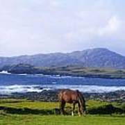 Horse Grazing In A Field, Beara Art Print