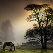 Horse Grazing In Field Print by Land and Light