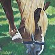 Horse Grazing Art Print