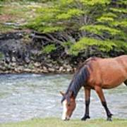 Horse Grazing Art Print by Thanks for choosing my photos.