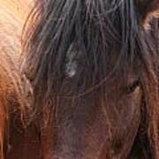 Horse Hair 2 Art Print