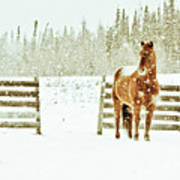 Horse In A Snowstorm Art Print by Roberta Murray - Uncommon Depth