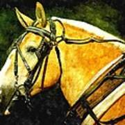 Horse In Paint Art Print
