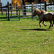 Horse Jump Art Print