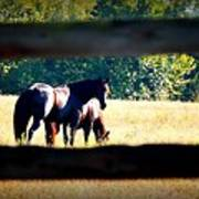 Horse Photography Art Print