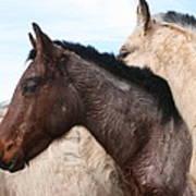 Horse Pileup Art Print