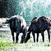 Horse Tails Color Splashed Art Print